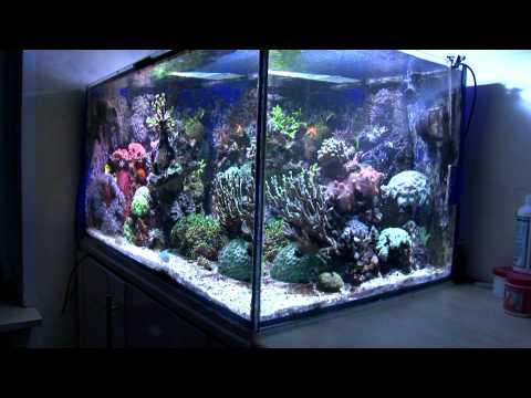 wasserwechsel aquarium meerwasseraquarium wassertausch. Black Bedroom Furniture Sets. Home Design Ideas