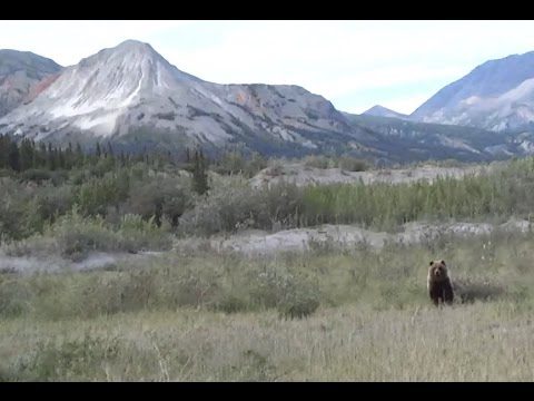 Thumbnail: Charged by a Grizzly Bear in the Canadian Wilderness