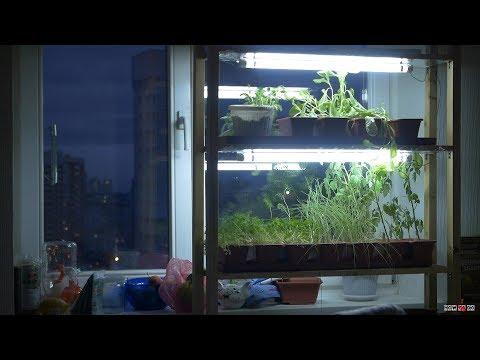 Таймер для растений на Arduino