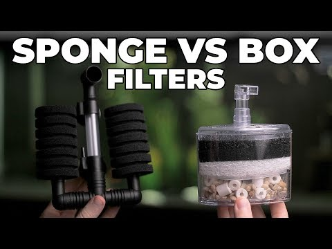 Box Filters Vs Sponge Filters! Which One Is Better?