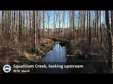 Restoring Squalicum Creek Re-route - Looking Upstream