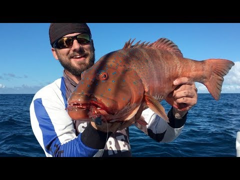 Random Boat Fishing Catches  Bundaberg, Queenland, Australia