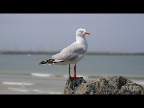 4K Coffs Harbour New South Wales AUSTRALIA Part 27 オーストラリア