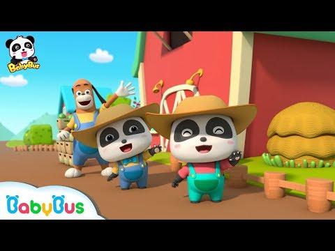 Picking Strawberries with Baby Panda   Strong Tractors & Panda's Farm   BabyBus