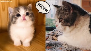 Cute kittens in the world | Boss TikTok