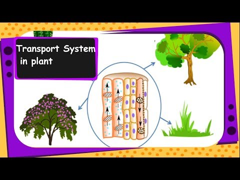 Learnhive | cbse grade 7 science transportation in plants and.