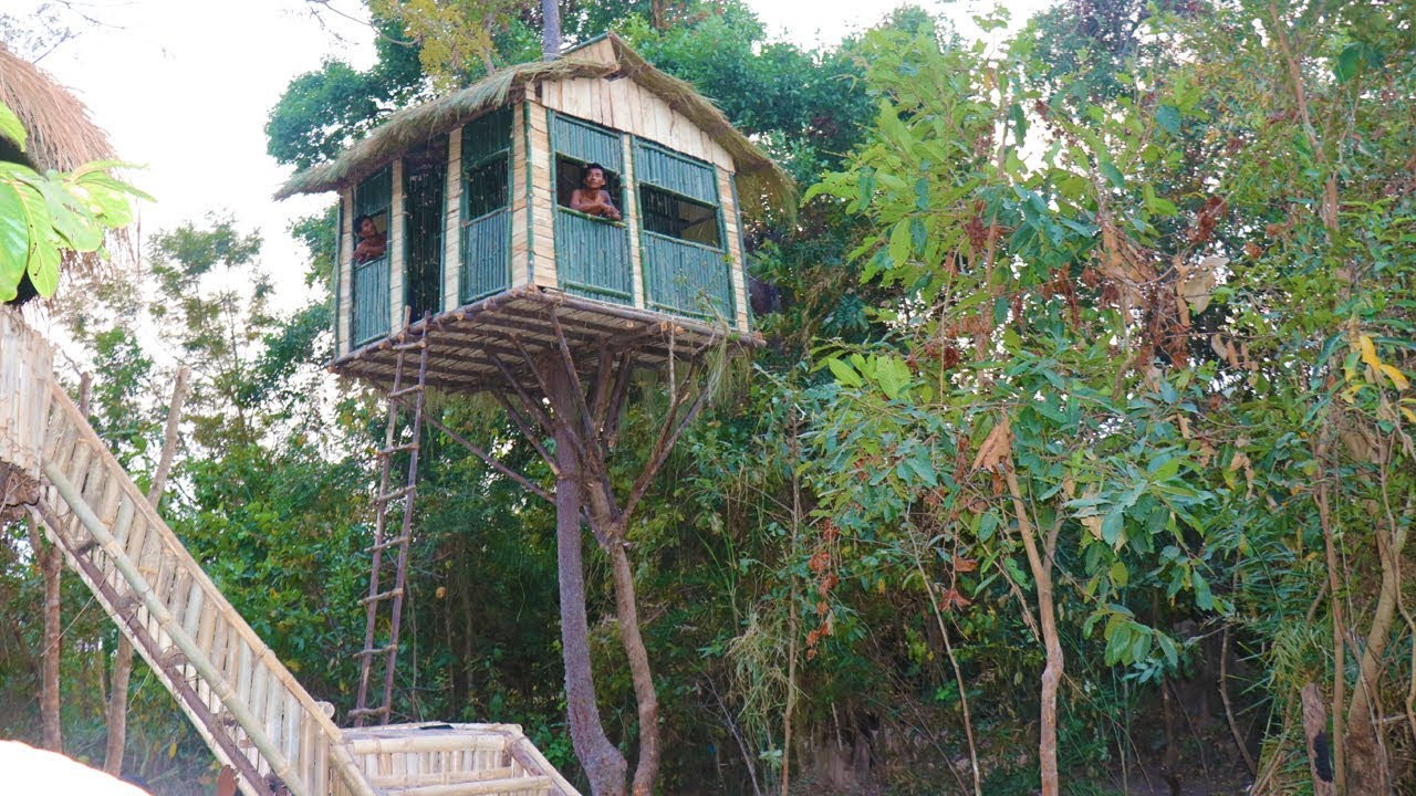 Build Tree House In Wild  To Avoid Wildlife