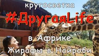 Африка ч8. Центр жирафов в Найроби.Кения l #ДругаяLife(Крутая получилась серия! В ней есть всё: много радости от общения с жирафами в одном из самых интересных..., 2016-08-16T05:16:34.000Z)