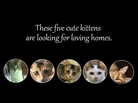 Five adorable kittens are up for adoption!