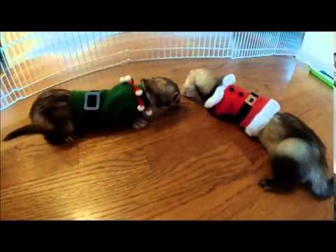 A Ferret Merry Christmas