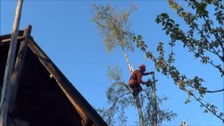 Вам надо спилить дерево около дома? Мы поможем.(www.9973079.moy.su Санкт-Петербург и Ленинградская область., 2012-06-10T09:04:57.000Z)