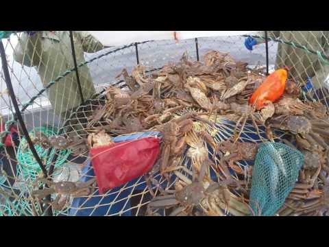 Snow Crab Fishing 2017