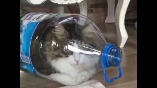Gambar cover Amazing Cat Ability 😱😱😱