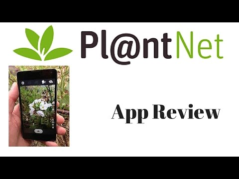 Plant Net App Review - How to use plant net app on your phone