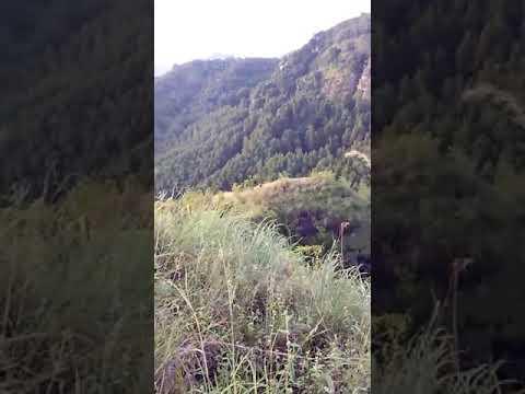Suasan hunting hewan besar di gomo