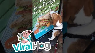 This Dog Just Wants a Sandwich