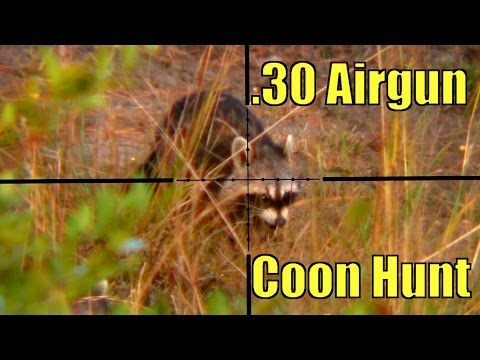 30 Air Gun Raccoon Hunt HD Scope Camera - YouTube