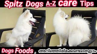 അറിയാതെ  പോകരുത്  Indian Spitz Dogs Care Tips and Food List Malayalam.