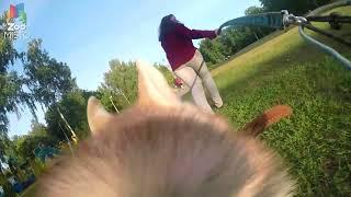 ГоПро и Хаски - Мир глазами собаки | GoPro and Husky - Go pro dog