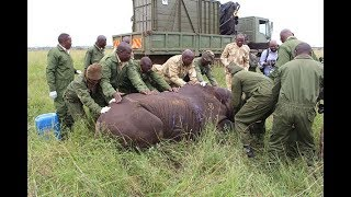 Dr. Richard Leakey: What could have killed the eleven rhinos at Tsavo National Park