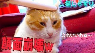 謎のブラシ「ねこじゃすり」に猫たちの顔面がとんでもないことにwww