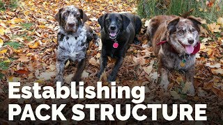 Establishing Pack Structure with the Family Dog