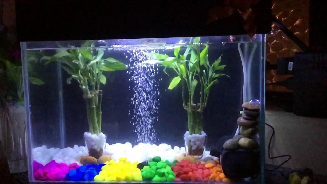 Lucky Bamboo In Aquarium Youtube