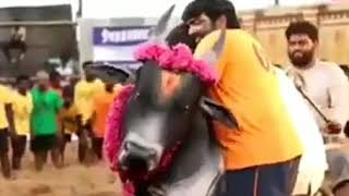 Karuppan Tamil Movie Making Scene in Jallikattu Background | Vijay Sethupathi