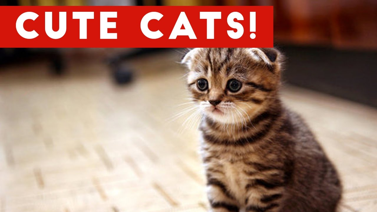 cutest cats compilation 2017