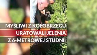 Myśliwi z Kołobrzegu uratowali jelenia z 6-metrowej studni!