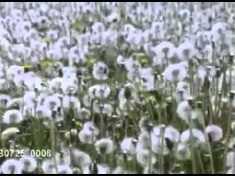 Metapopulation [HD]