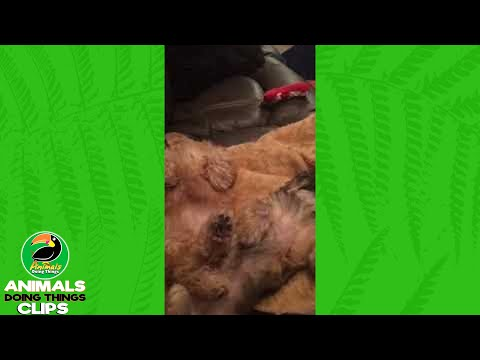 Twitching Sleeping Dogs Side by Side | Animals Doing Things Clips