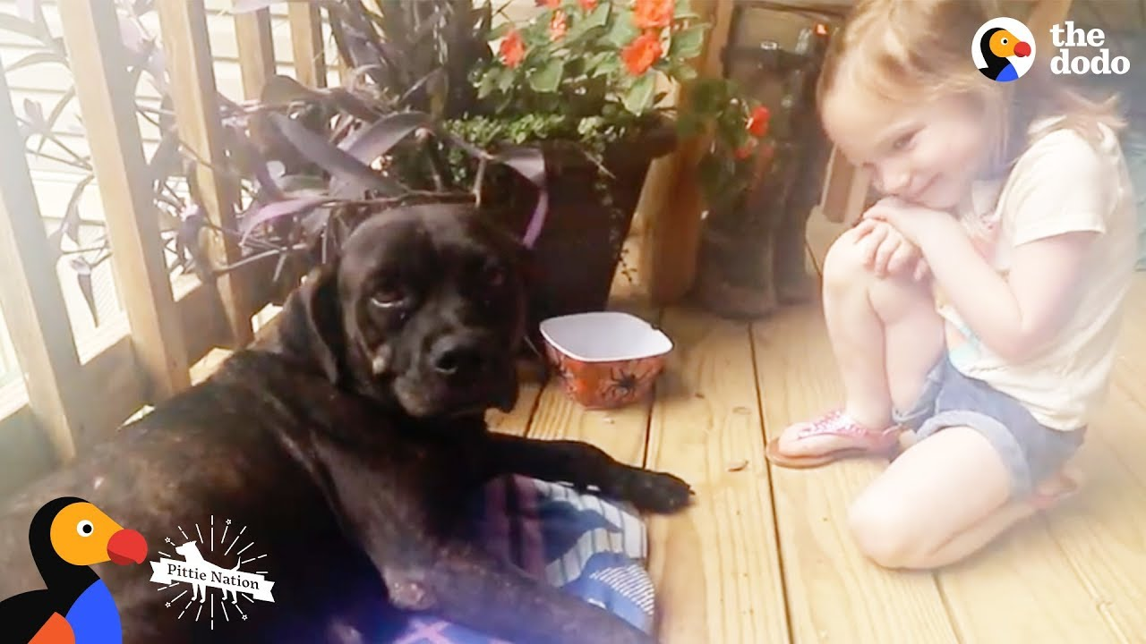 Stray Dog Shows Up on Couple's Porch And Changes Their Mind About Dogs | The Dodo Pittie Nation