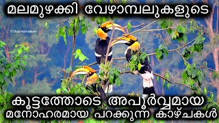 Great Indian Hornbill at Western Ghats