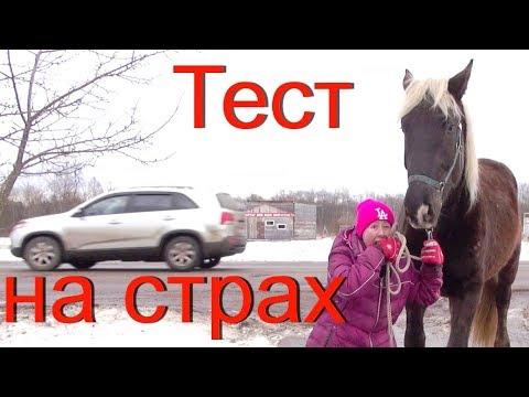 Тест на пугливость лошади.