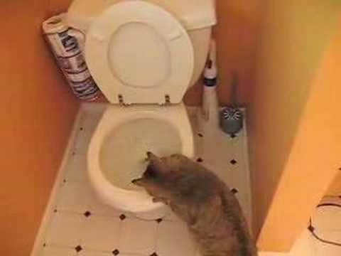 Parry Gripp LYRICS - Cat Flushing a Toilet Lyrics