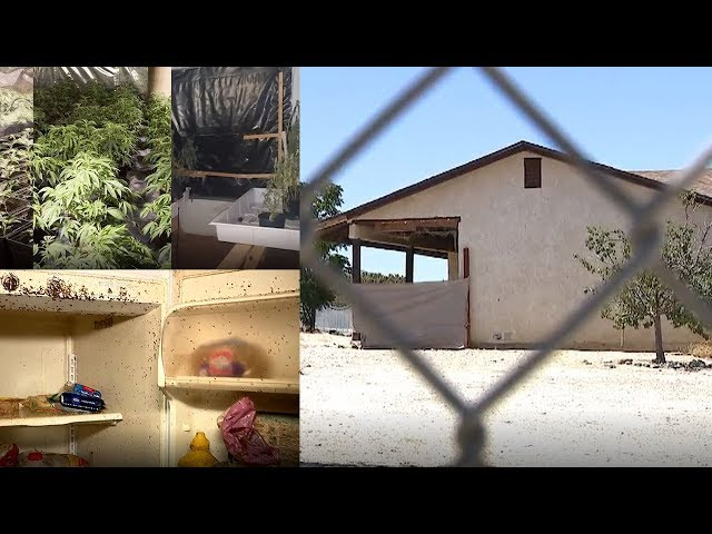 DRUG HOUSE OF HORROR:  Landlord ruined after tenant converts rental home into marijuana grow house