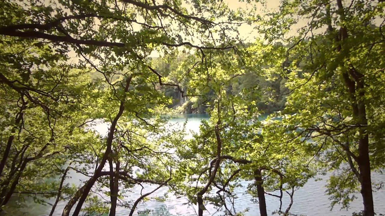 9738 las ramas de los rboles y de fondo las cascadas - Ramas de arboles ...