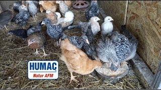 HUMAC® Natur AFM - Hydina
