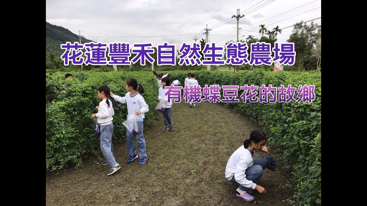 【農村體驗】小小農夫 採摘蝶豆花 種玉米種子 體驗農村趣 (花蓮豐禾自然生態農場) - YouTube
