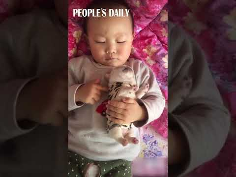 Adorable Toddler Holding A Baby Bulldog In His Chest