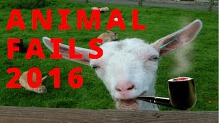 Epic Animal Fails | february 2016 Ultimate Funny Animal Fails Compilation
