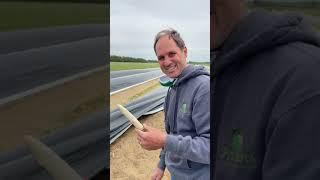 Comment récolter des asperges blanches du Québec? - Le garde-manger d'Hélène (45)