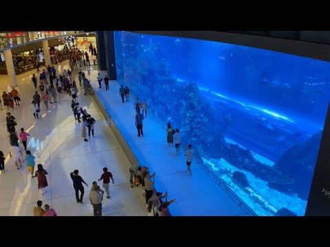DUBAI AQUARIUM AND UNDERWATER ZOO | DUBAI MALL UAE