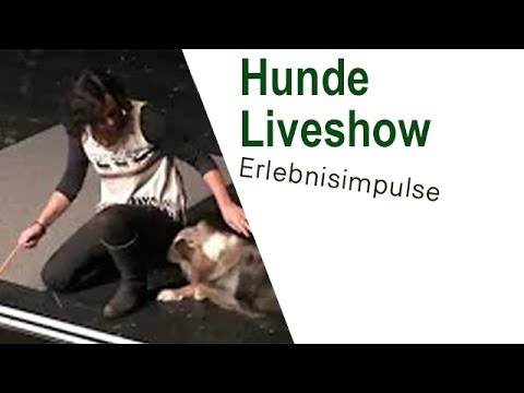 Maja Nowak Hundeliveshow Detmold 9.12.2016, Australian Shepherd: Juna