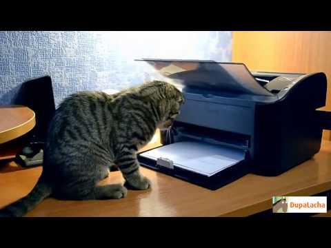 Приколы с котятами - YouTube