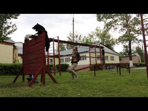 Грюнендаль Гектор. Дрессировка и дог-фризби. Ultimate dog frisbee tricks