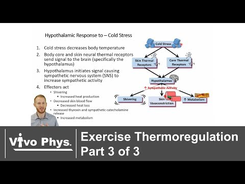 Exercise Thermoregulation Part 3 of 3 Exercise in the Cold