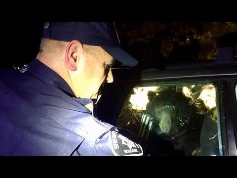 Hungry Bear Breaks Into Car