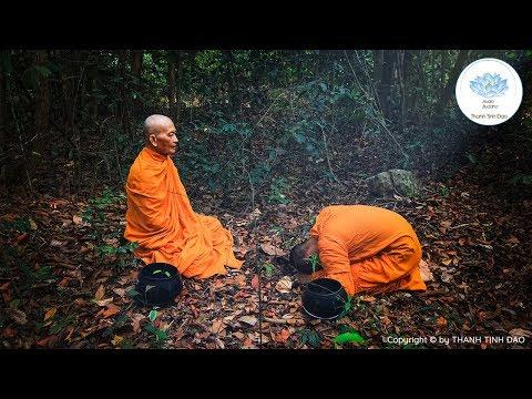 Phật dạy 4 sự thật của kiếp người giúp GIẢI THOÁT KHỔ ĐAU chứng pháp bất  diệt đi lên dòng thánh đạo